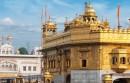 Indie – nowa potęga na rynku domen
