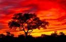 20 najdroższych domen RPA