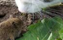 """Giełdy crypto bawią się z rządem w kotka i myszkę: """"przeskakują"""" z domeny na domenę"""