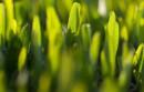 Końcówka .green, ze względu na dużą społeczność która za nią stoi, ma spore szanse na powodzenie
