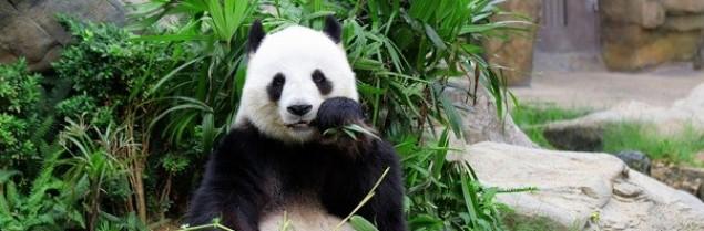 Google ogłosił kolejną aktualizację Pandy