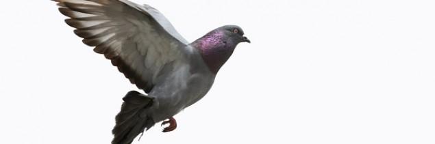 Jak działa Google Pigeon? Wyjaśnia Jacek Jurczyński z SEO Venture