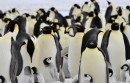 Google Penguin został włączony do jądra algorytmu wyszukiwania. Co z tego wynika?